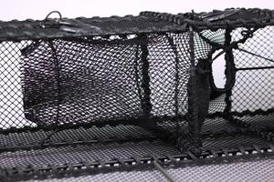 Leppefiskteine - Doble sultekammere