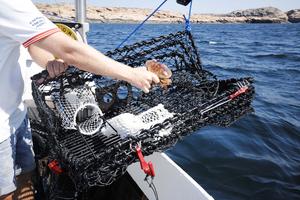 Hummerteine Fritidsfiske, Sammenleggbar