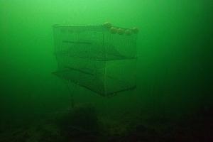 Havteine - 150x100cm, en kalv