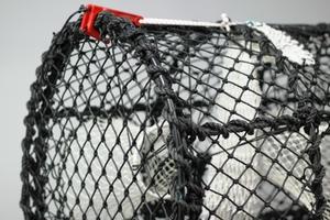 Hummerteine Yrkesfiske, 17kg