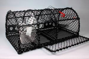Hummerteine Yrkesfiske 19kg